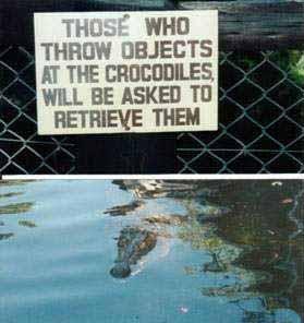 Allegiance - crocs
