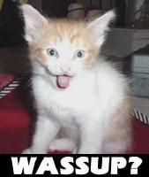 Allegiance - kitty3