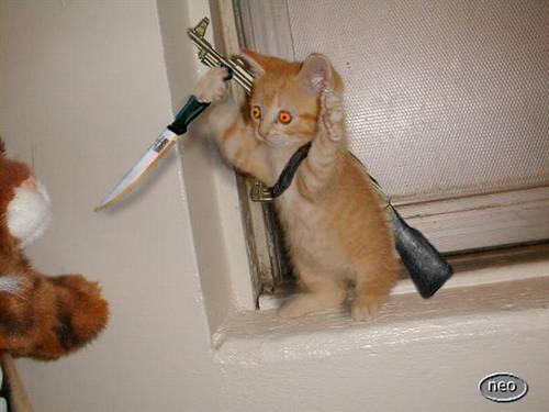 Allegiance - kitty!!!!!!